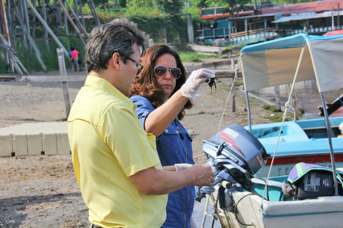 MARN investiga el tipo de alga que se ha extendido en gran parte del Lago de Coatepeque